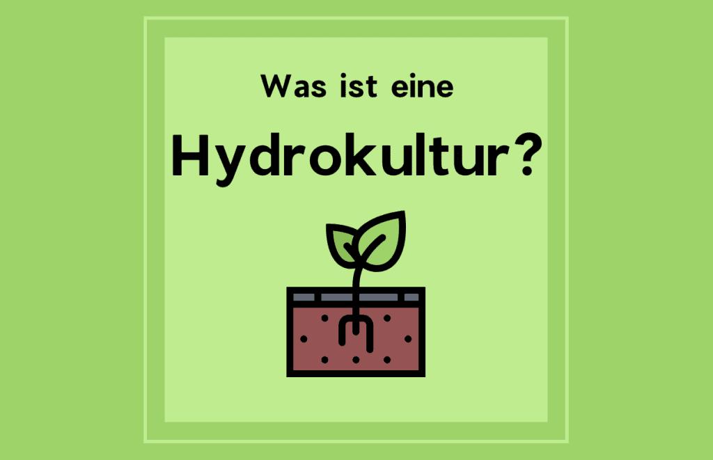Hydrokultur2